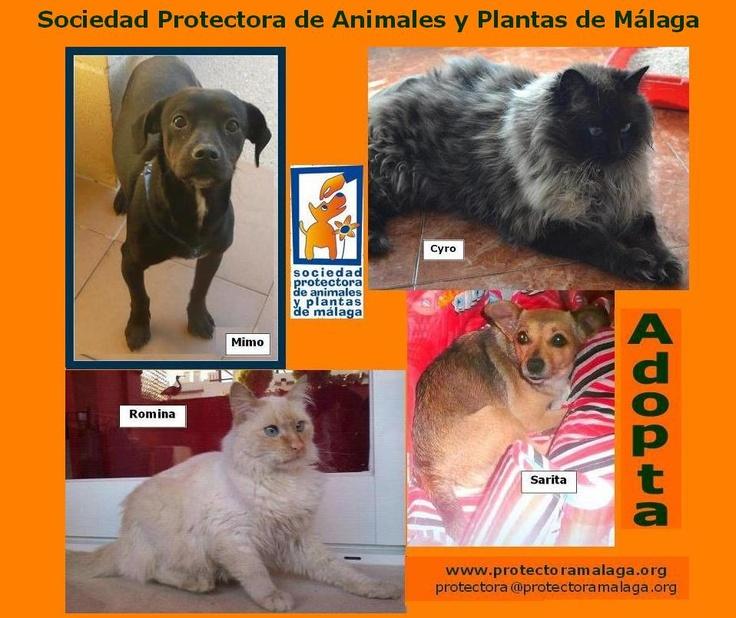 Protectora de Animales y Plantas de Málaga  www.protectoramalaga.org  http://elbosquenatural.blogspot.com