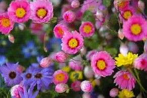 Image result for australian wildflowers images