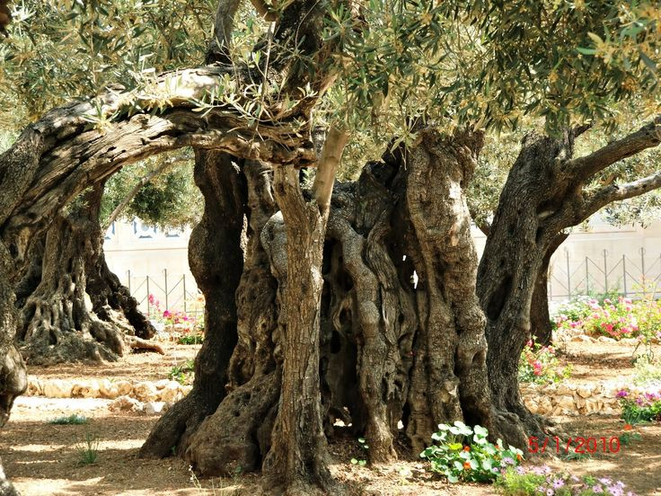 56 Best Biblical Sites Images On Pinterest Holy Land City And Traveling