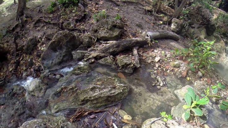 Have you ever explored the streams at Bath, Barbados?