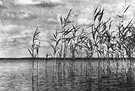 Zdjęcie Jan Bułhak,Sitowie-Jezioro Narocz - 1924 r.