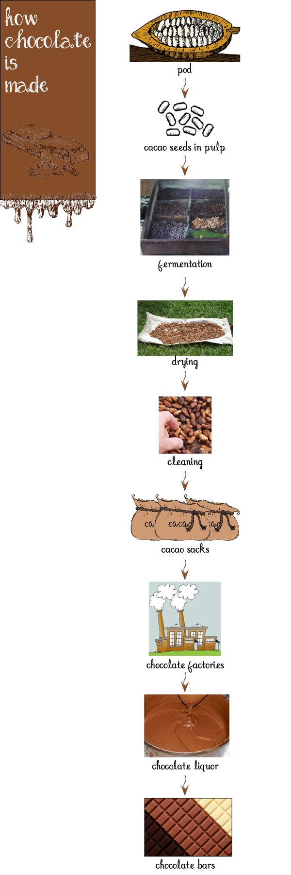 How chocolate is made craftivity - From my Chocolate Unit for Pre-K and Kindergarten!