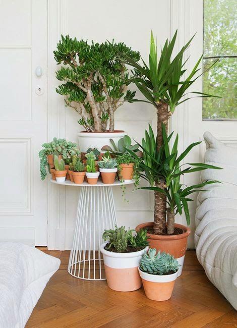 Idée décoration urbann jungle pour ranger ses plantes au sol