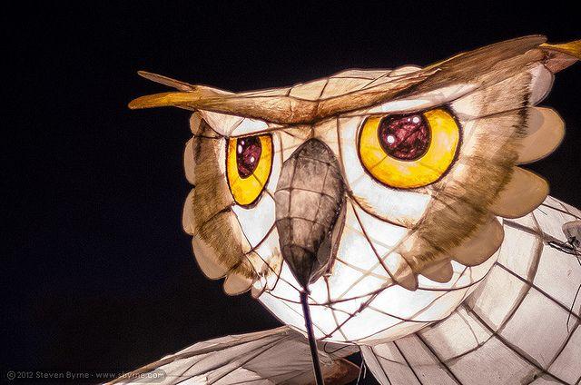 Owl lantern - 2012 Lismore Lantern Parade by sbyrnedotcom, via Flickr