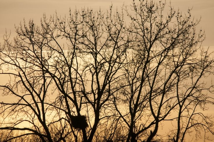 Setting sun illuminates trees at Sunset Beach, Vancouver, British Columbia, Canada