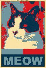 Yes, we cat.