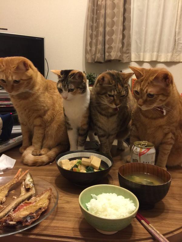 干物を焼いた時の猫の距離感wwwwwww