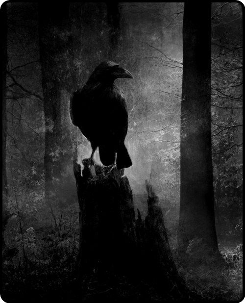 in the forest…  creatures of the night abound..