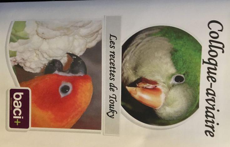 Colloque-aviaire #parrot #petbirds #companionparrot #birdclub