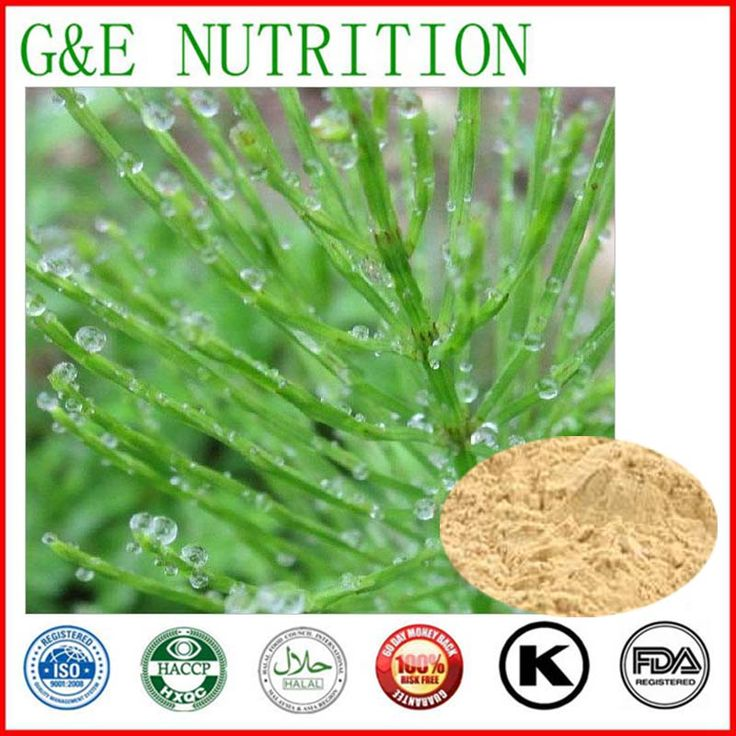 Natural horsetail plant extract powder/horsetail powder extract-silicic acid 800g 20:1