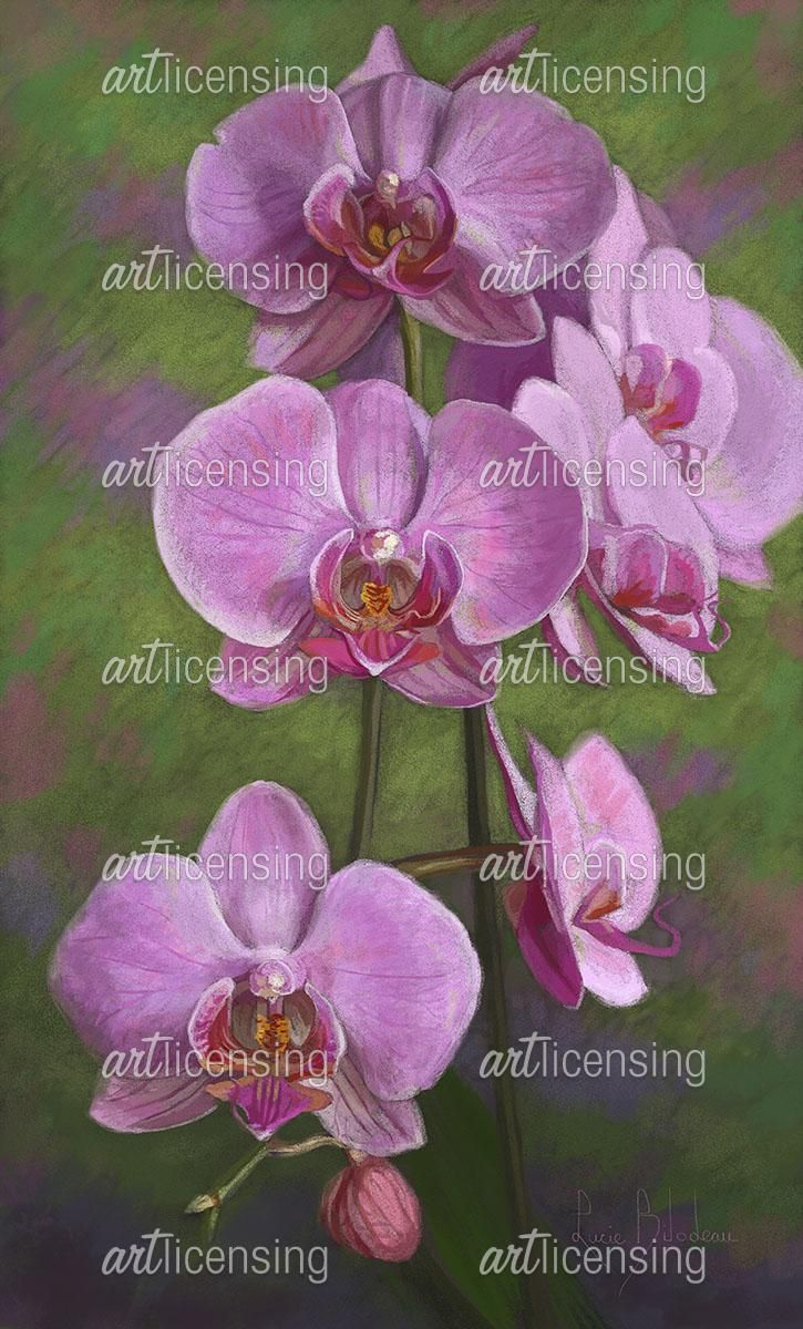 Orchids | Art Licensing