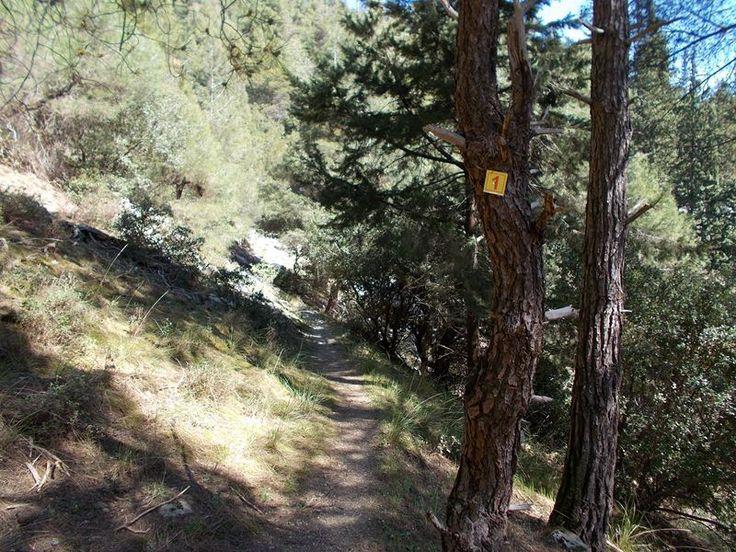 Πεζοπορία στην Τσαριτσάνη με τους Φίλους του Βουνού και του Δάσους