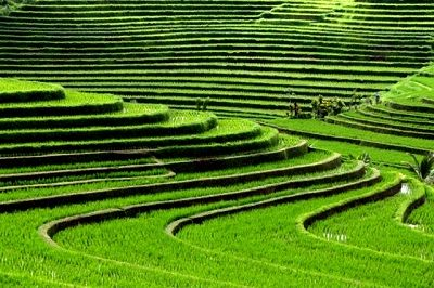 Jatiluwih Tour is one of the best tour in Bali island to visit Rice Terrace