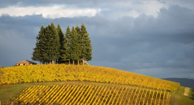 The Willamette Valley and Wine Country Travel Guide - Expert Picks for your Willamette Valley and Wine Country Vacation | Fodor's