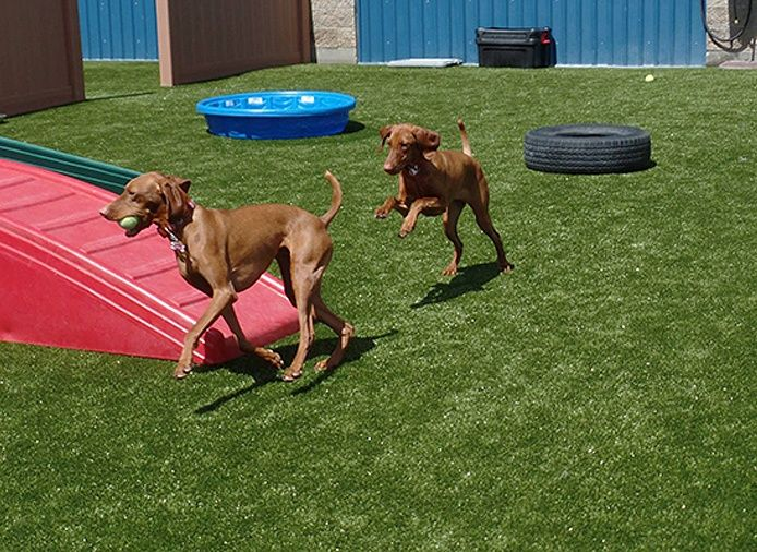 Castle Rock Co Pet Boarding And Daycare Facility Installed Square Feet Of New In Their Outdoor Play Yards