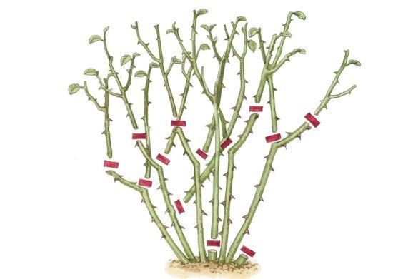 Ihr denkt, Rosen zu schneiden ist kompliziert? Überhaupt nicht! OBI hat für euch eine Schritt-für-Schritt Anleitung die euch weiter hilft.