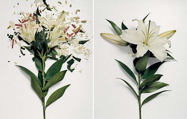 Broken Flowers | Who thinks to soak fresh flowers in liquid nitrogen for 30 minutes before smashing them into hundreds of little glass-like pieces?! Jon Shireman, that's who. Honestly, cool.
