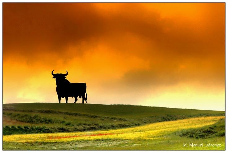 One of the Osborne bulls in Spain
