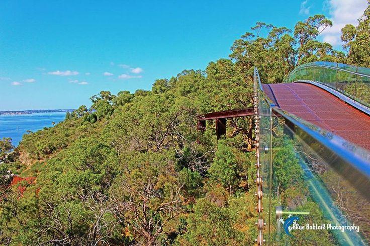 Treetop walk #Australia #Treetop #WalkAmongTheTreetops #highflyer