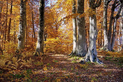 35PHOTO - Никишин Евгений - Буковый лес.Кавказ. Красная поляна.