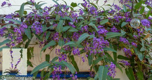 46 Best Robbins Tsou Plants Images On Pinterest Plants