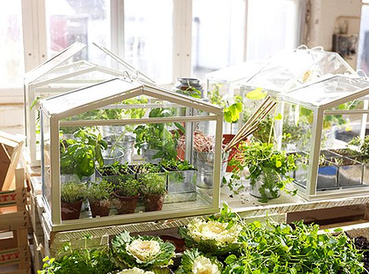 IKEA mini greenhouses ... be still my heart