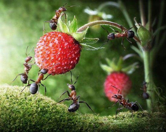 Die besten 25+ Ameisenarten Ideen auf Pinterest Gottesanbeterin - ameisen in der küche was tun