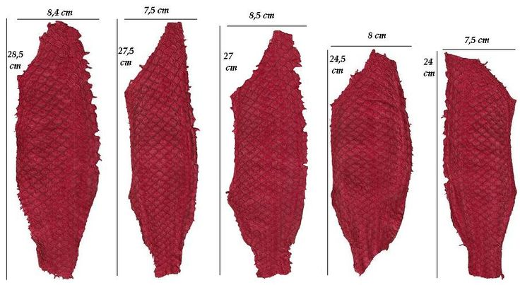 Tilapia leather: possible size variation within the same batch.