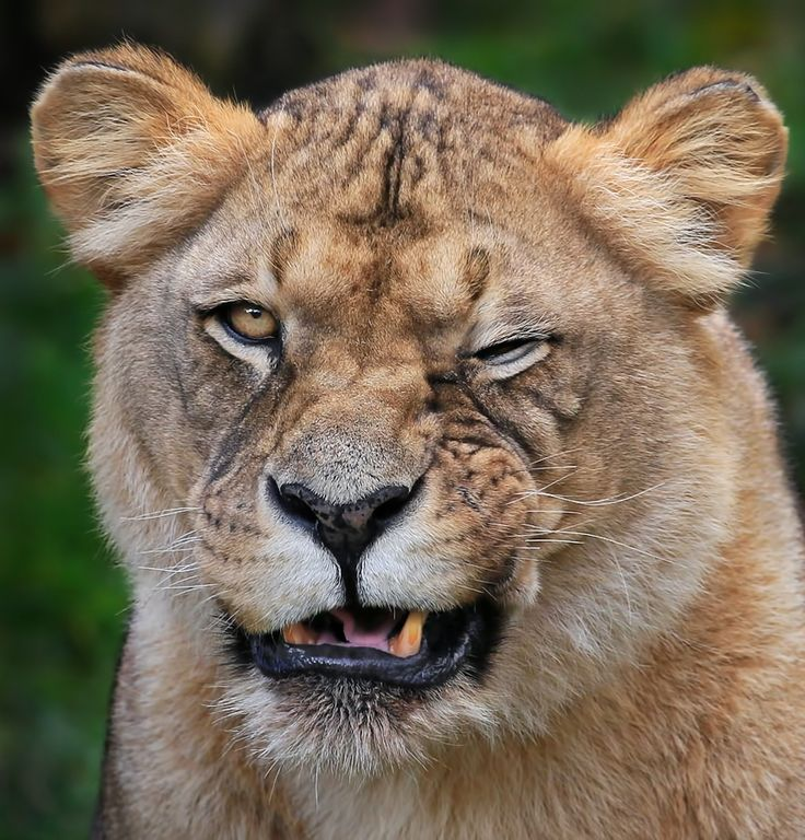 On 500px? You're kidding! by Klaus Wiese on 500px