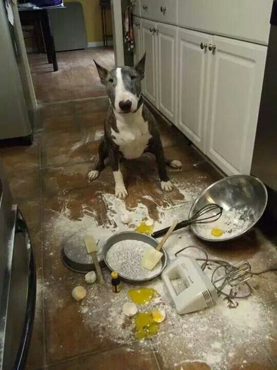 Happy Mother's Day, Mommy... I made you breakfast...