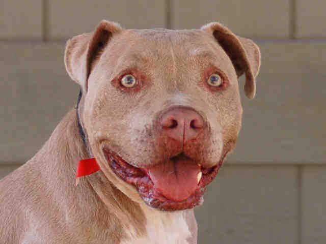 Adopt Daisy On Petfinder Dog Adoption Animal Shelter Dogs