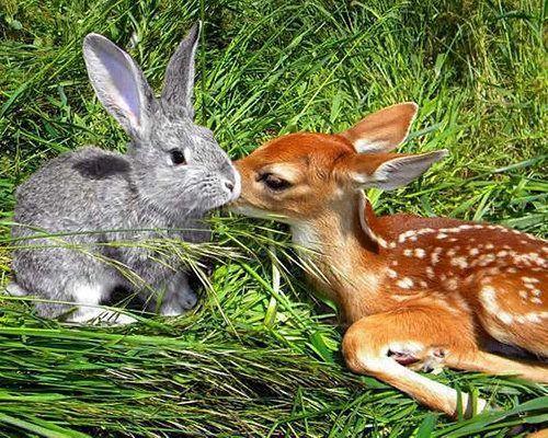 Die besten 25 Lustige tierbilder kostenlos Ideen auf Pinterest