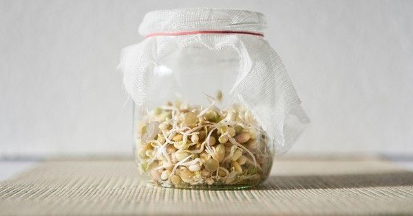 Grow your own sprouts in a jar : TreeHugger