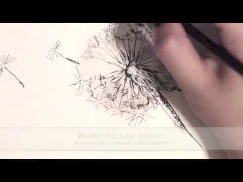 How to Draw a Dandelion - Watch me draw pretty a dandelion in 1 minute in the stop motion video :D