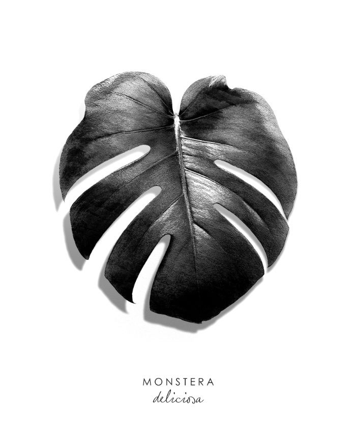 Monstera leaf black white art print monstera art poster print