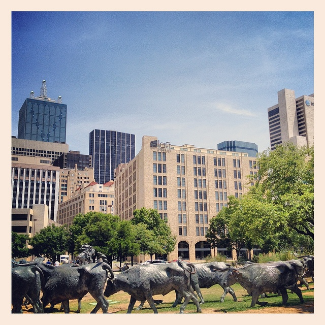 Cattle Drive Sculpture in Pioneer Plaza, downtown Dallas, Texas