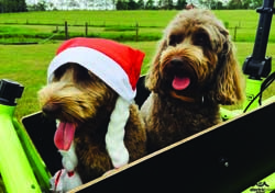 Our furry mascots love going riding :)