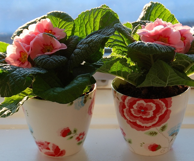 GreenGate latte cups - Is there anything you can't do?