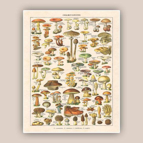 Mushroom art, mushroom print, botanicals, mushroom decor, fungus, kitchen art, educational poster, kitchen decor, kids room decor, 11x14 on Etsy, 170:18kr