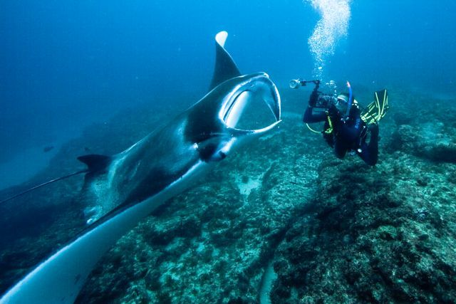 Manta Lodge and Scuba Centre : Stradbroke Island :: Learn to Dive - Online Open Water Course