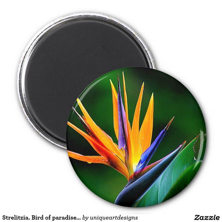 Strelitzia. Bird of paradise flower.