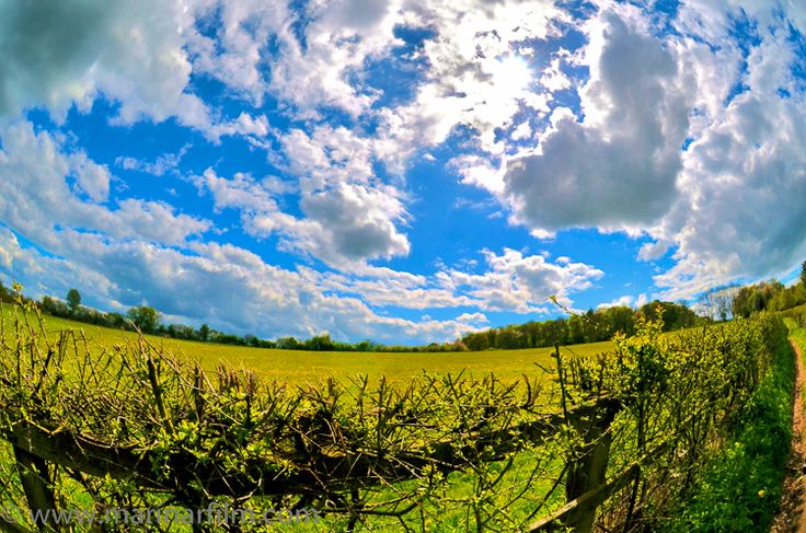 """""""And above all, watch with glittering eyes the whole world around you because the greatest secrets are always hidden in the most unlikely places. Those who don't believe in magic will never find it."""" – Roald Dahl, """"The Minpins"""" #englishcountry #countryliving #sunnyday #beautifulsky #countryfield #landscapephotography"""