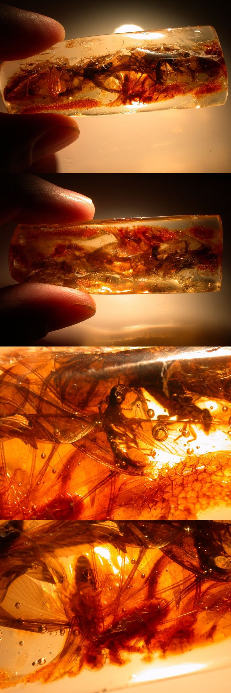 Amber 10191: Mating Swarm Of Winged Termites With 2 Winged Ants In Colombian Copal Amber -> BUY IT NOW ONLY: $45 on eBay!