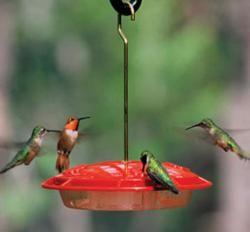How to keep bees away from hummingbird feeders.