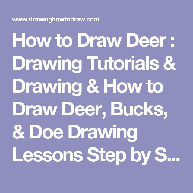 how to draw a doe