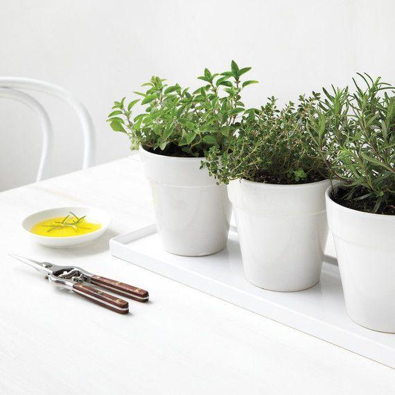 Indoor Herb Garden Tips For Every Season