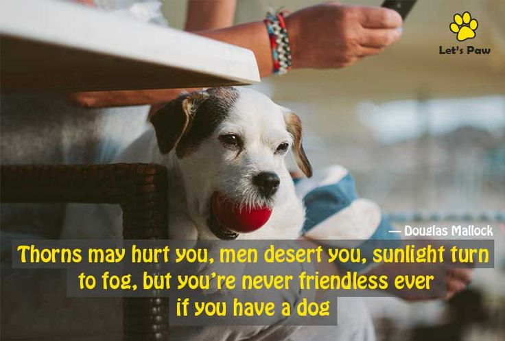 Thorns may hurt you, men desert you, sunlight turn to fog; but you're never friendless ever, if you have a dog. —Douglas Mallock