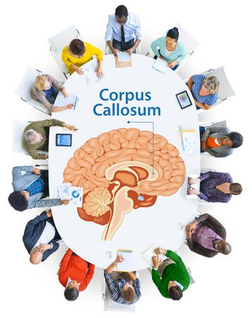 National Organization of Disorders of the Corpus Callosum National Organization of Disorders of the Corpus Callosum » National Organization of Disorders of the Corpus Callosum » Research ProgramsNational Organization of Disorders of the Corpus Callosum National Organization of Disorders of the Corpus Callosum » National Organization of Disorders of the Corpus Callosum