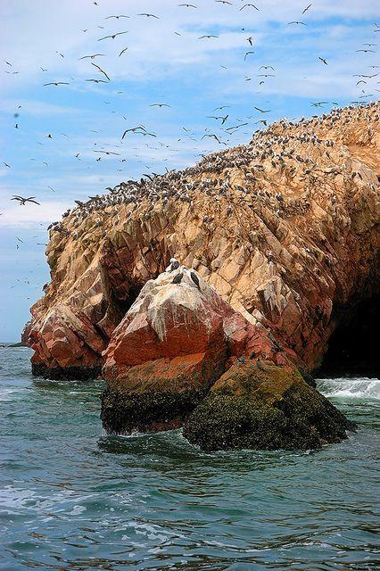 Jour 3 : Visite des îles Ballestas