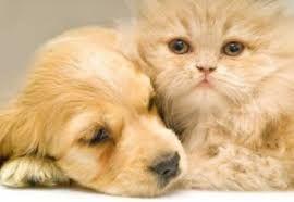 Imagini pentru caini si pisici haioase